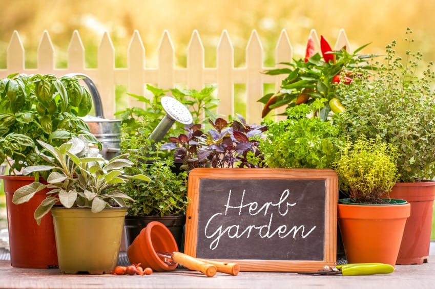 How to Make a Kitchen Herb Garden